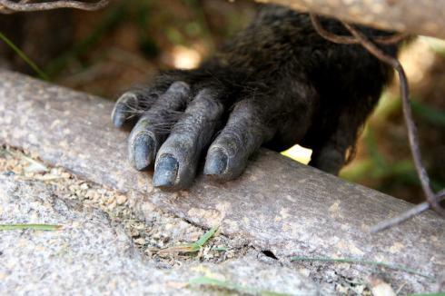 Monkey Hand - Credit: Forrest Copeland