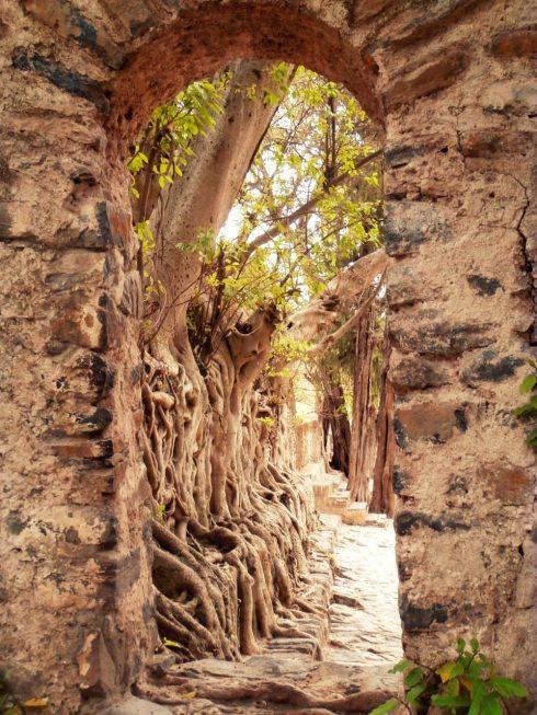 Roots at Fasil Baths