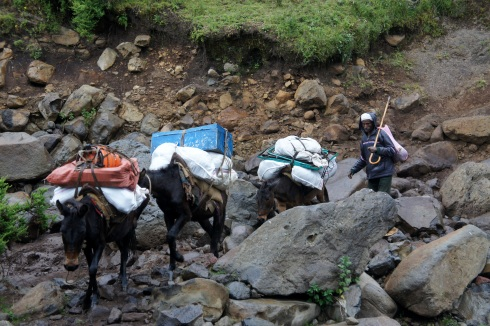 these donkeys carried our stuff... I guess we aren't that hardcore.