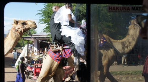 Wedding on camel