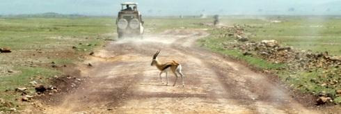 gallopin' (Thompson Gazelle)