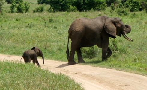 BABY ELEPHANT!!!!