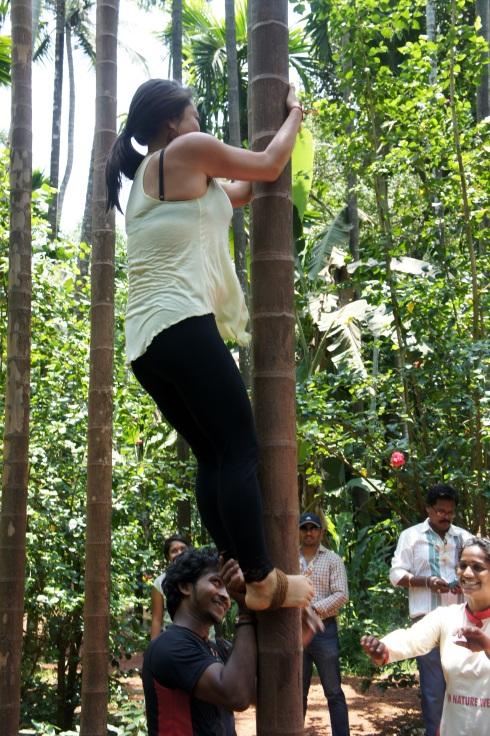 Cashew harvesting by climbing palms