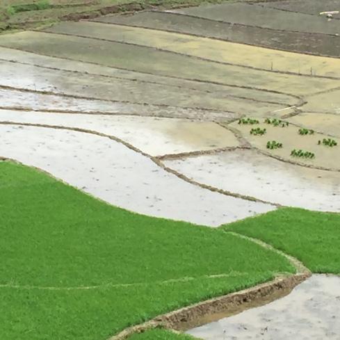 Terraced rice paddies.